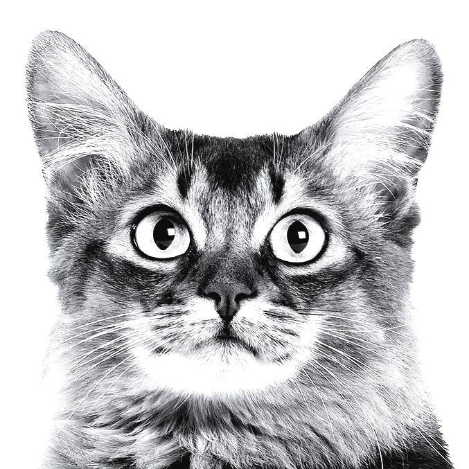 Как определить возраст кота - wikihow
