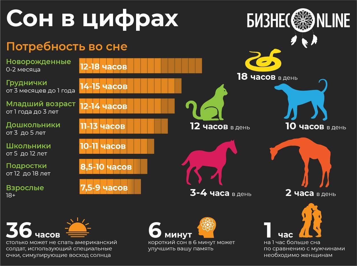Сколько времени спят коты в сутки?