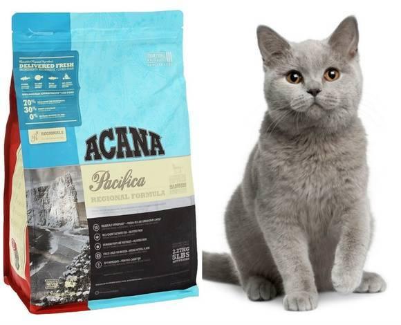 Топ-12 лучших кормов для кошек и котят 2020 года в рейтинге zuzako