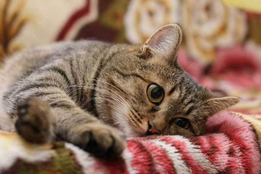Кошка после отравления: чем кормить, правила лечения