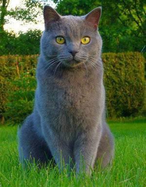 Краткий обзор пород кошек