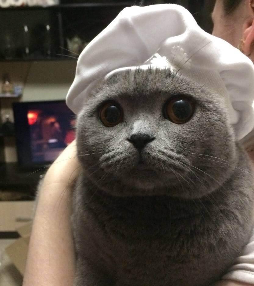 Как помыть кота, кошку, котенка?