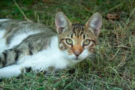 Кошка и новорожденный - запись пользователя виктория (id2230895) в сообществе благополучная беременность в категории мой малыш - babyblog.ru