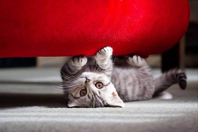 Уборка в доме, где живет кошка. хитрости уборки квартиры, в которой живут домашние животные что потребуется для работы