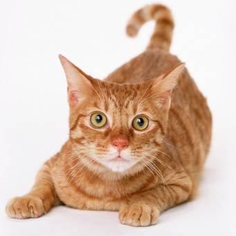 Год кролика (кота, зайца) по китайскому гороскопу: какие они – люди с двойным знаком?
