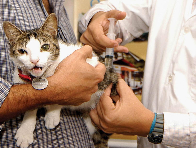 Сальмонеллез у кошек и котов