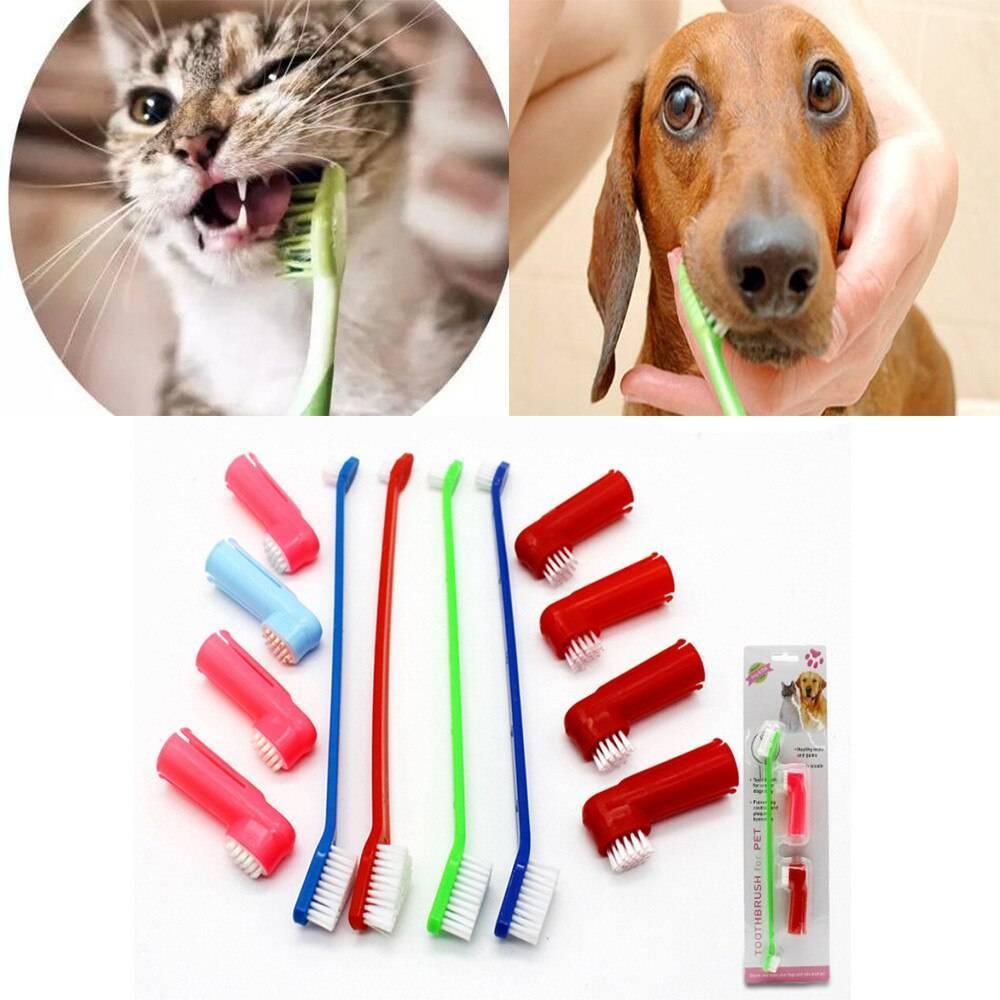 Зубной камень у кошек: удаление в домашних условиях, причины появления