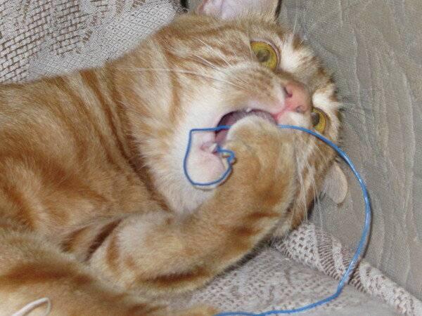 Почему кошка кусает котят? психология кошки
