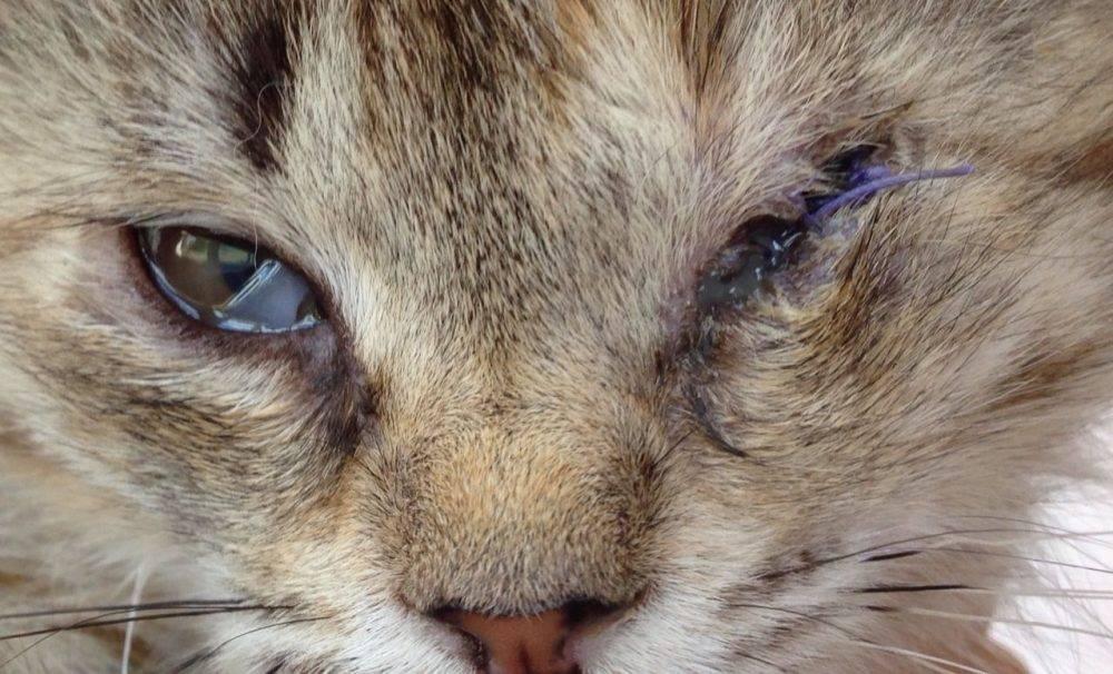 Когда открываются глаза у котят?