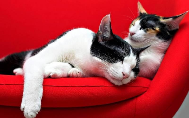 Какую ткань выбрать на диван если дома кошки обзор антивандальных тканей