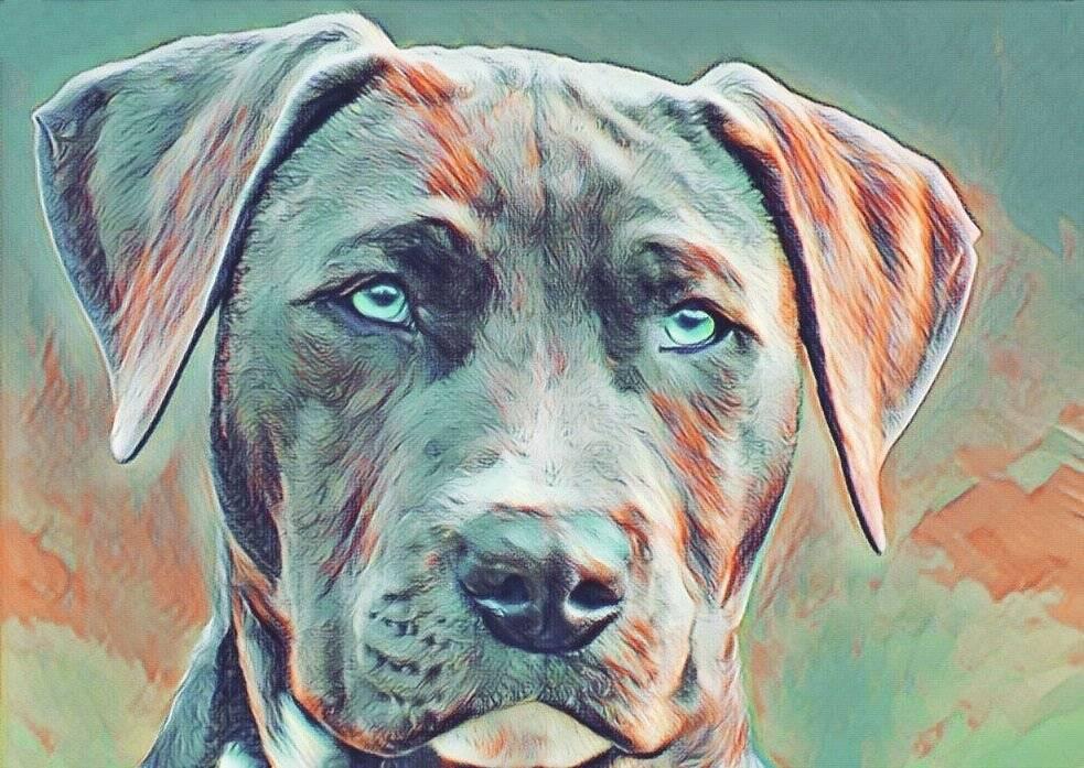 В один клик: как записаться с кошкой или собакой к ветеринару через mos.ru