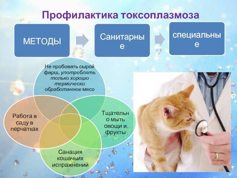 Токсоплазмоз у кошек и его симптомы