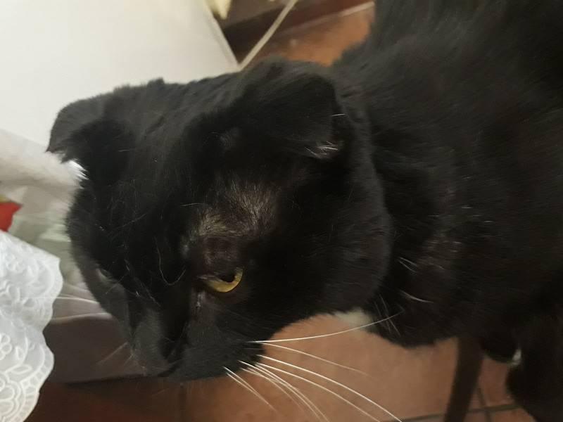 Из-за чего у кошки может выпадать шерсть на ушах?