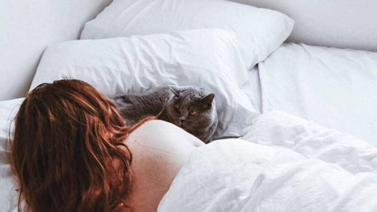 Почему кошка ложится на человека: научные гипотезы и сверхъестественные версии, способности кошки лечить, польза и вред сна человека рядом с кошкой