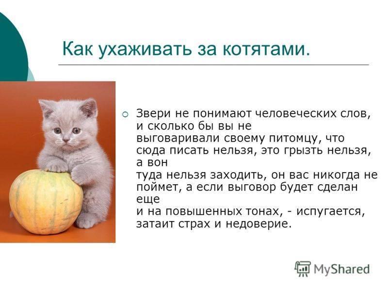 Как ухаживать за котенком | новорожденным, без кошки