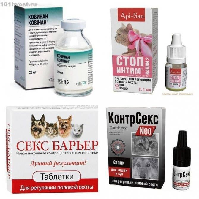 Какие таблетки помогут кошке во время течки?