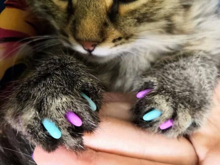Антицарапки на когти для кошек: инструкция, отзывы