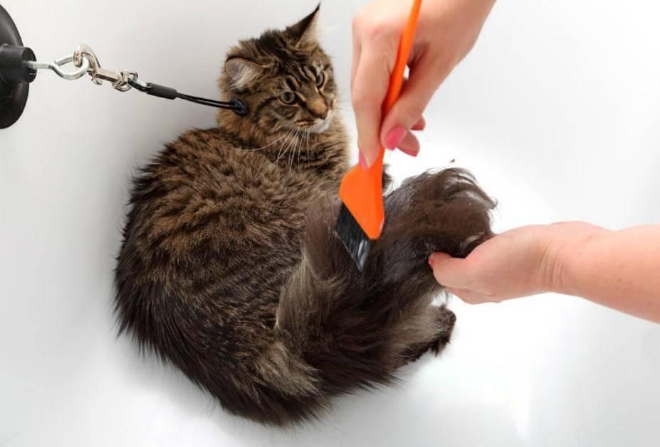 Нужно ли мыть кошек