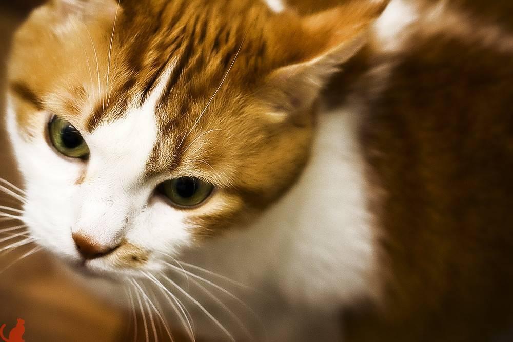 У кота или кошки слизь в глазах: что делать