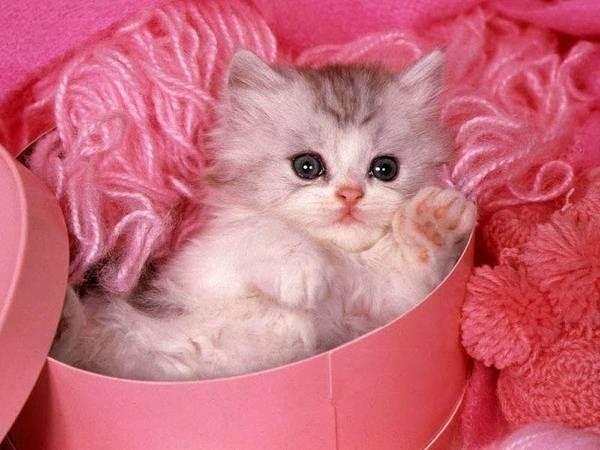 Подарить щенка или котёнка – хорошая идея или безответственный поступок?