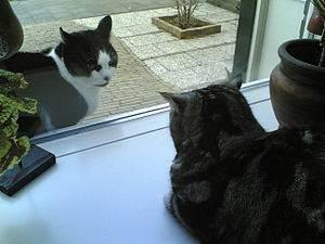 Самые распространенные болезни печени у кошек: симптомы и лечение