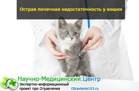 Болезнь почек у кошек последняя стадия