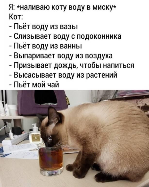 Обезвоживание у кошки что делать в домашних условиях: симптомы и лечение