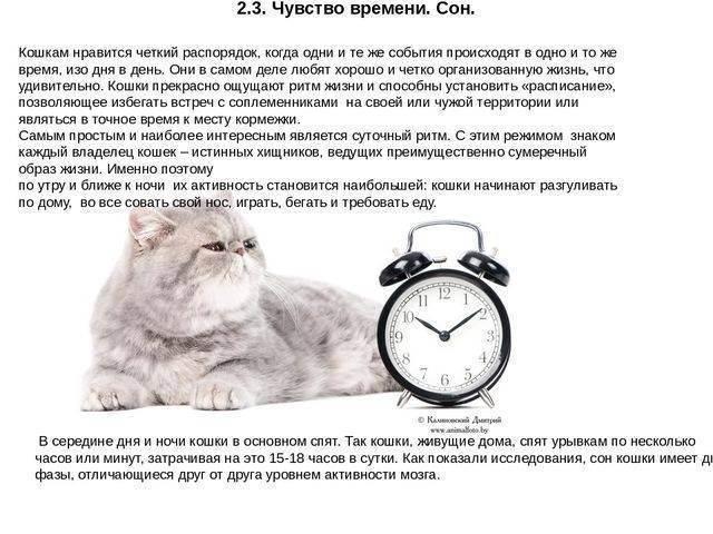 Биологические часы животных - рассказы и литература в доме солнца