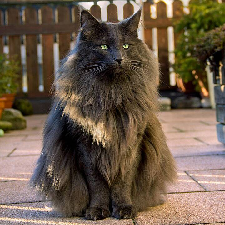 Рейтинг и фото самых необычных пород кошек