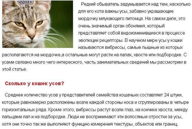 Почему у кота ломаются усы основные причины - oozoo.ru