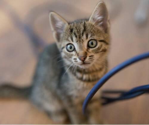 Тепловой удар у собаки, у кошки: признаки, первая помощь, профилактика. | ветеринарная служба владимирской области