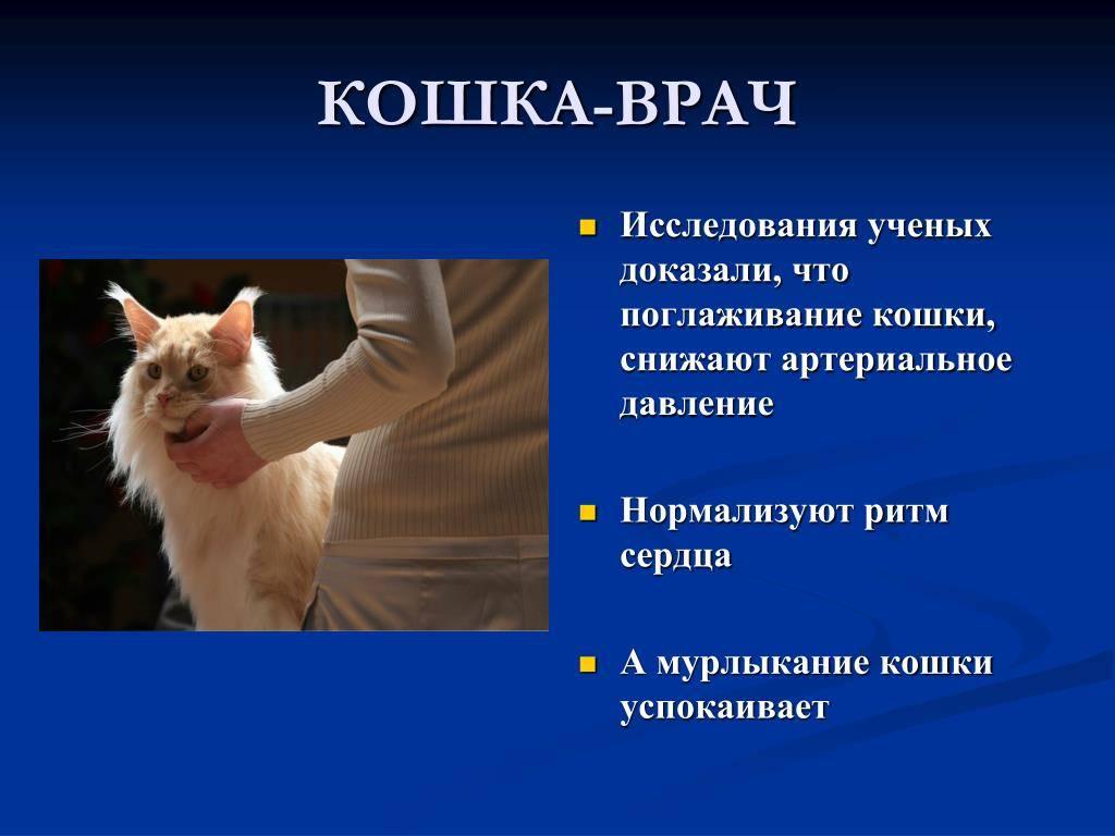 Кот агрессивный — как успокоить и что делать - oozoo.ru