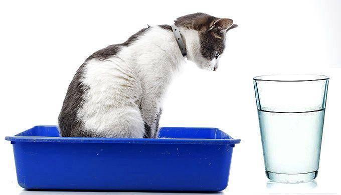 Как давать кошке вазелиновое масло до еды или после