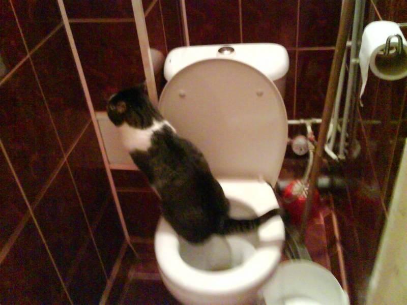 Почему кошка ходит в туалет по-маленькому очень редко, пьет мало воды: причины задержки мочеиспускания на сутки, 2–3 дня