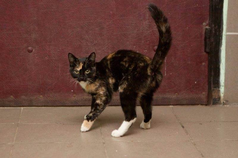 Как отвадить котов со двора народными средствами и сделать так, чтобы кошки не гадили в подъезде?