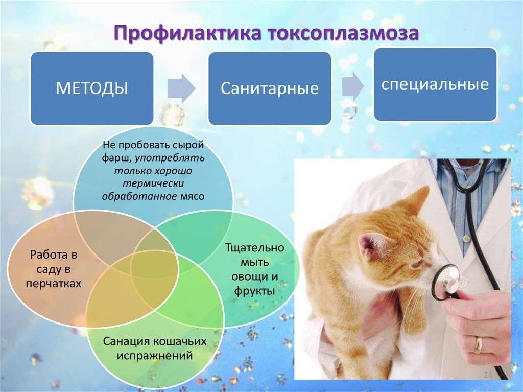 Болезнь от кошек токсоплазмоз симптомы у детей