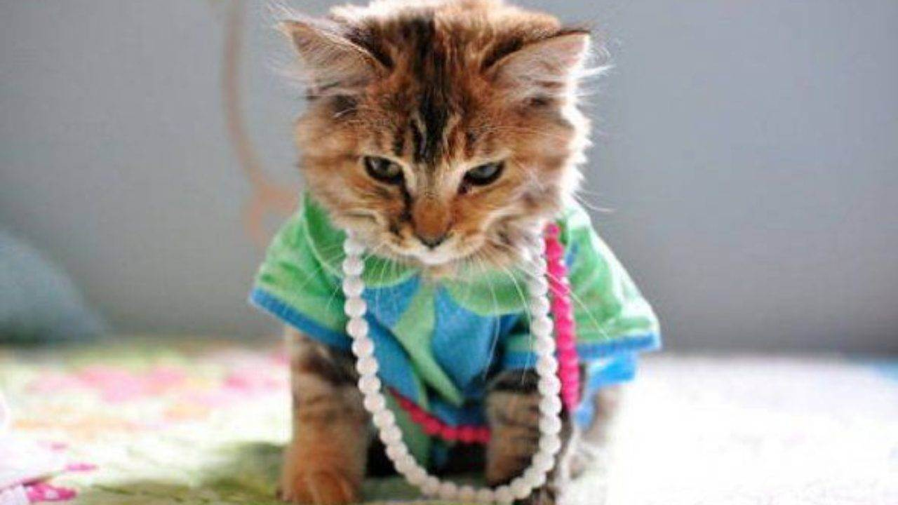 Самка или самец: определяем пол котенка точно