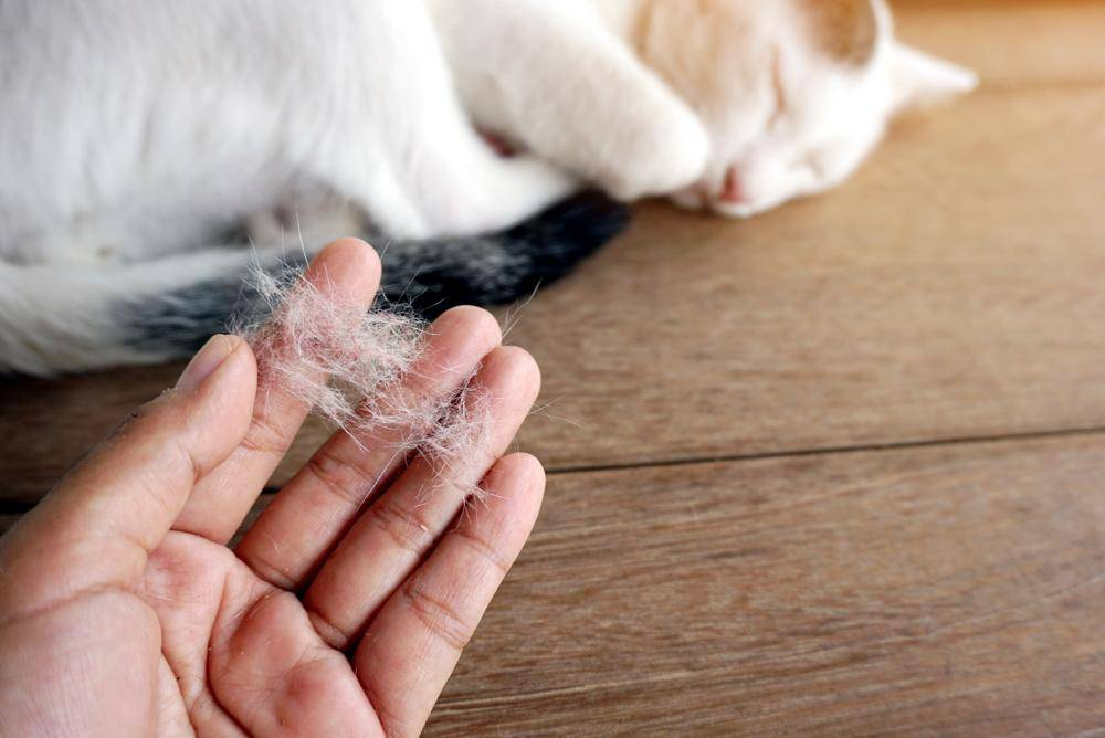 Таблетки от аллергии на кошек