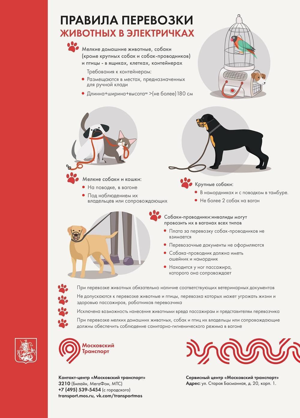 Как перевезти кота в поезде: подробная инструкция, правила и советы
