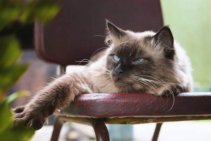 Ветеринарные советы, домашняя аптечка для кошек, как помочь кошке
