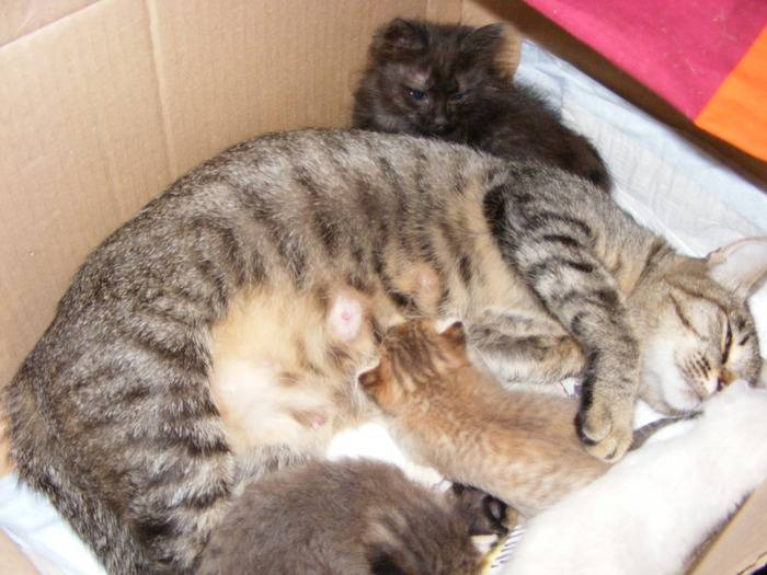 Когда котята открывают глаза: особенности открытия