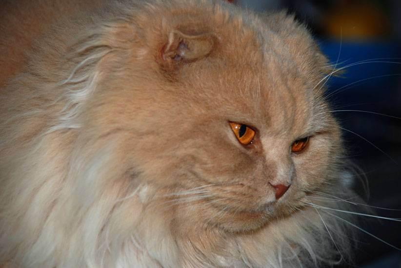 Колтуны у кошек причины и лечение - муркин дом