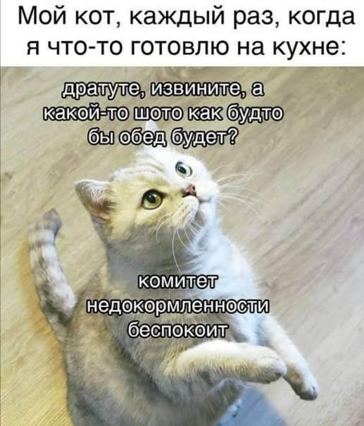 Что делать если кот орет по ночам. 3 самые частые причины