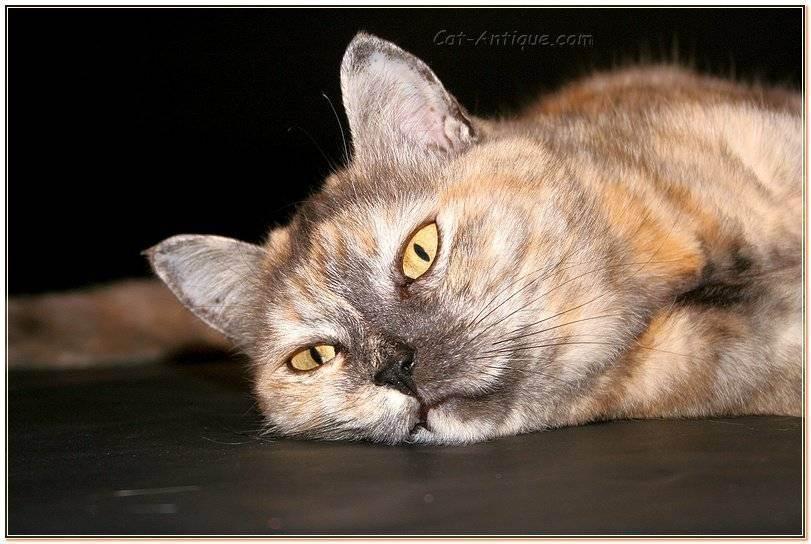 Если кошка вялая не ест и не пьет, что делать?