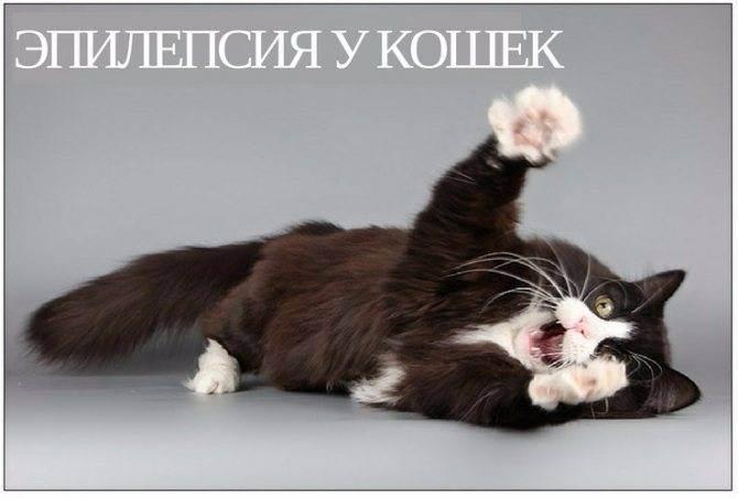 Эпилепсия у кошек и собак: причины и лечение