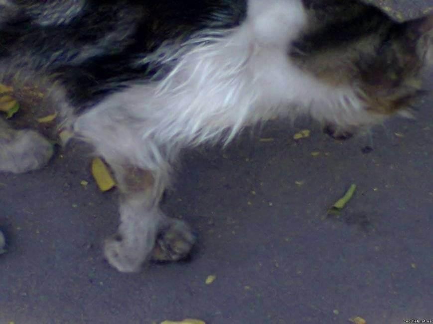 Уход за собакой со сломанной лапой