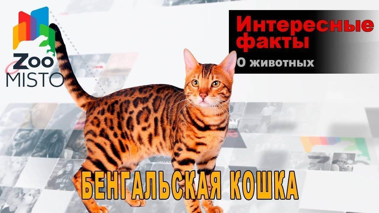 Кошка и улица: кто кого?