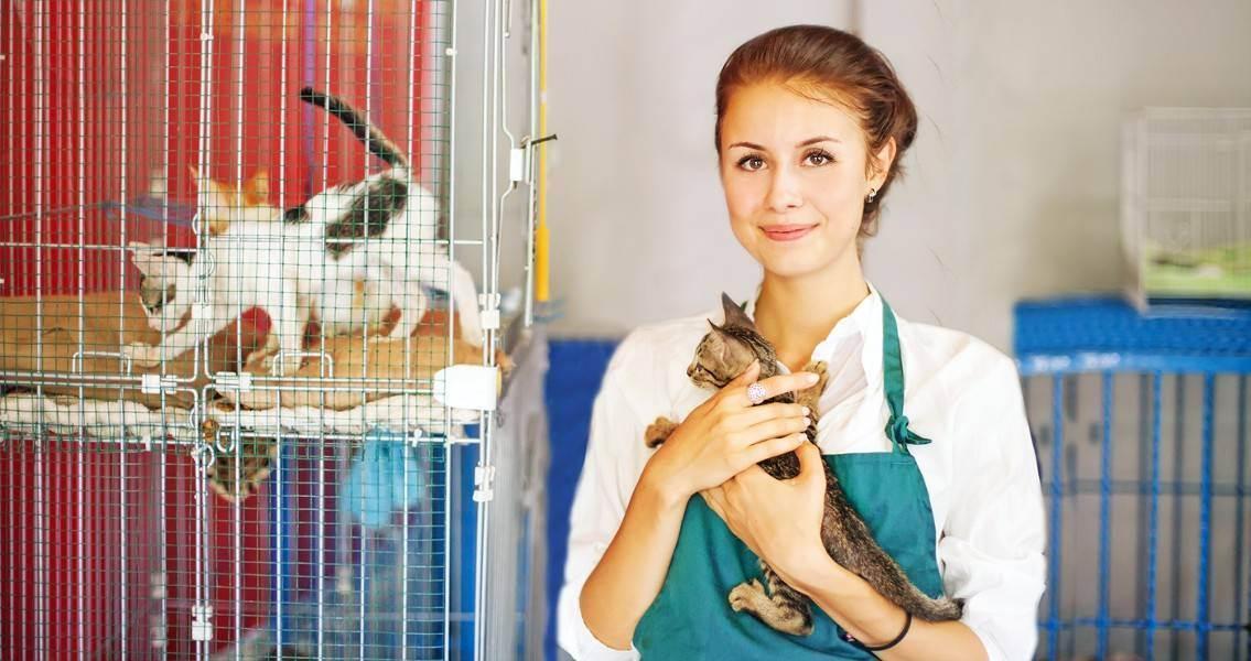 Как кошки влияют на нашу жизнь