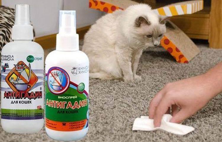Как навсегда отучить кошку гадить?