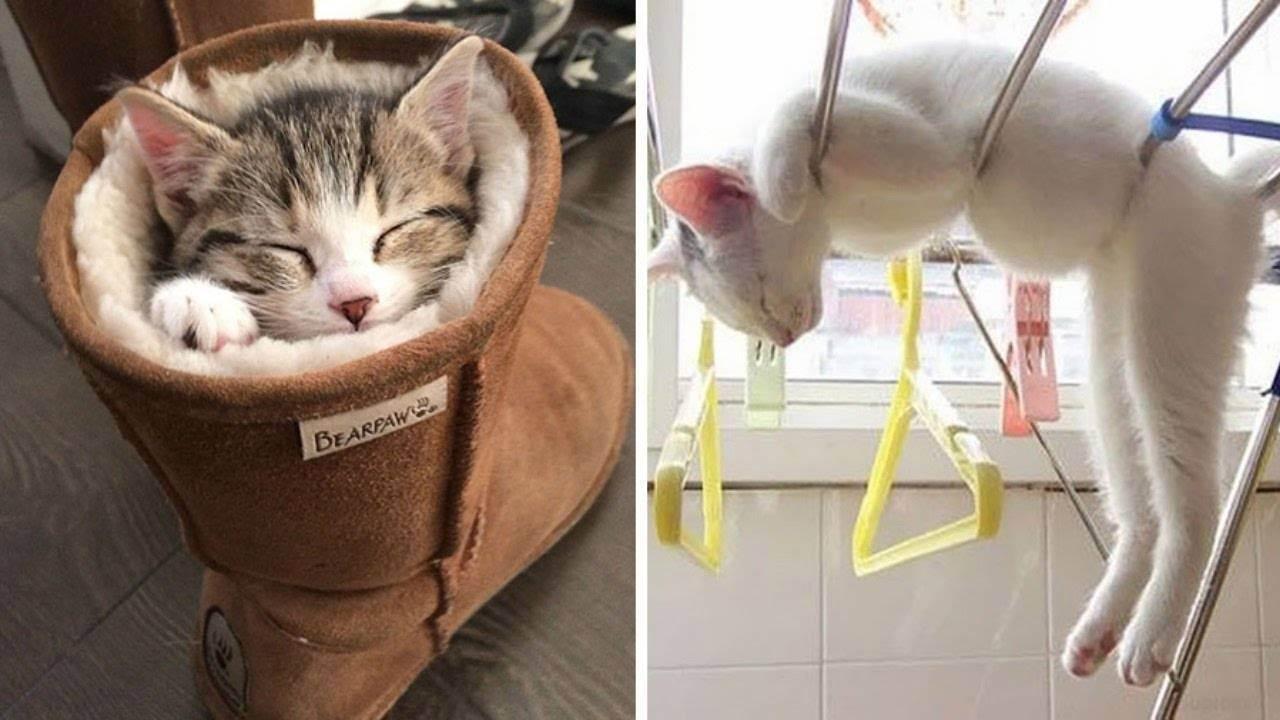 Сколько спят кошки [котята, старые или больные кошки]